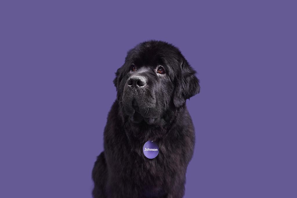 Johnson The Dog Portraits