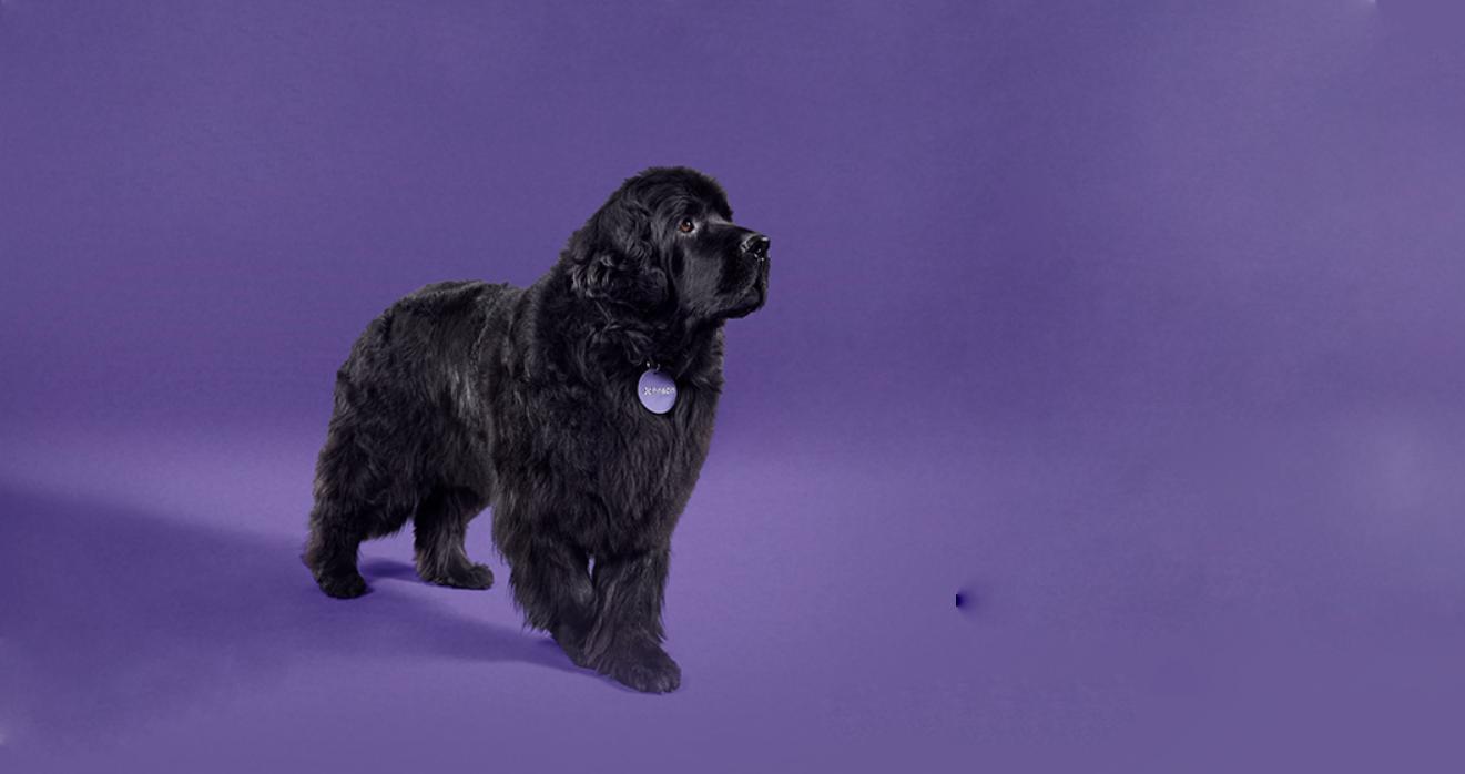 Dog header